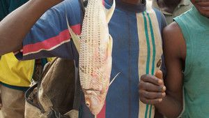 Monster Fish of the Congo photo