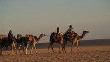 Sahara 節目
