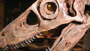 Dino Death Trap 照片