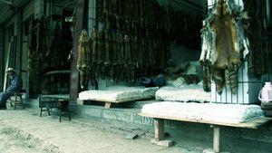 The Tiger Trade photo