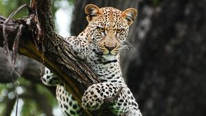 Big Cats photo