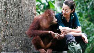 Enchanting Apes photo