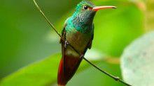 Smallest birds show