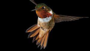 Smallest birds photo