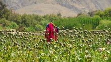Afghan Heroin show