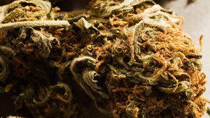 Marijuana 照片