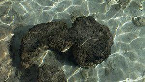 One Ocean photo