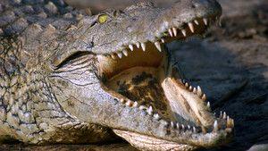 Supreme Predators photo