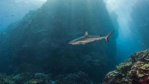 Shark Eden photo