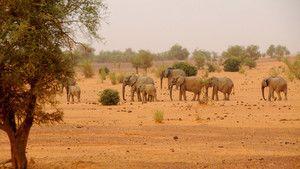 馬里象 Mali Elephants 照片