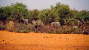 أفيال مالي صورة