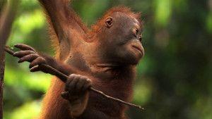 غابة بورنيو صورة