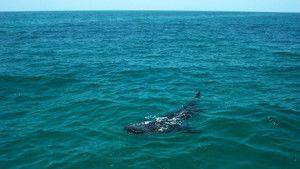 الحيتان صورة