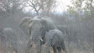 Safari Live photo