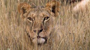 Hunters or Hunted photo