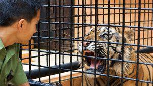 Sumantra's Last Tigers Gallery 照片