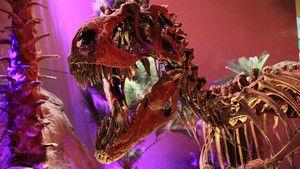 T. Rex Trauma photo