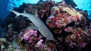 Shark Bait photo