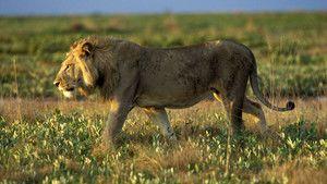The Mighty Zambezi photo