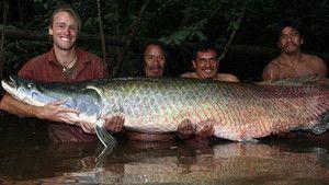 Amazon Giant photo