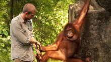 Ape Man of Sumatra show