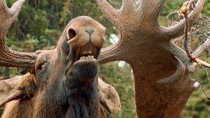 Montauk Monster photo