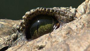 Close Ups photo