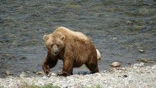 Alaska Landscape show