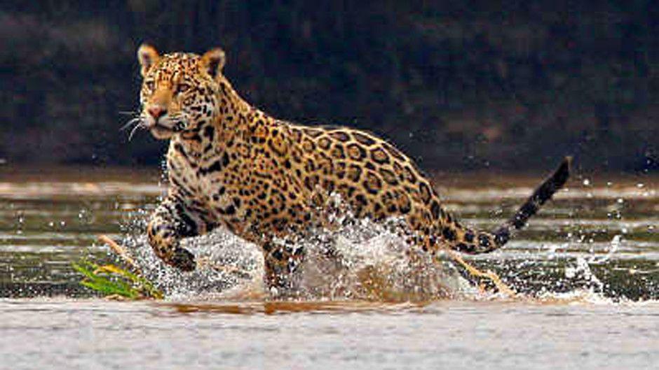 Картинки по запросу природа амазонка