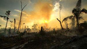 Amazing Amazon 照片