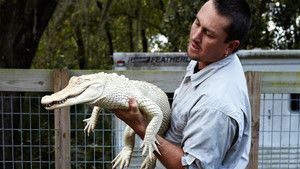 Snakes and Gators photo