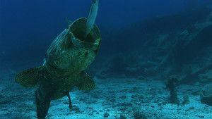 Super Fast Fish photo