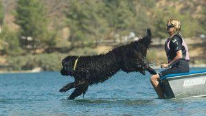 Wolf to Dog photo