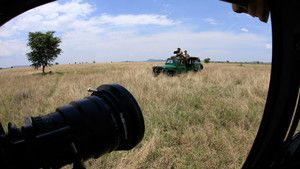 Stalking Lions photo