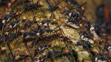 City of Ants show