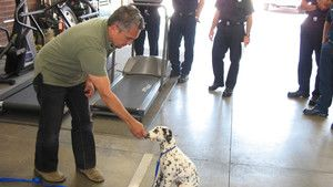 Dog Whisperer 3 Episodes 1-5 photo