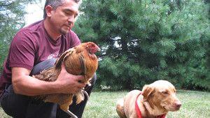 Dog Whisperer 3 Episodes 6-10 photo