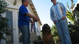 Dog Whisperer 3 Episodes 16-20 photo