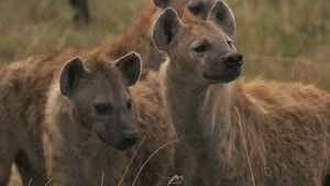 Hyena Gangs photo
