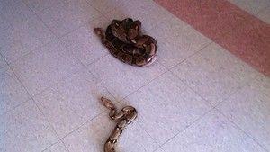 The Animal Fugitives Gallery photo