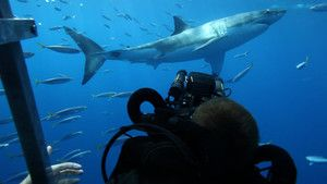 Great White Ambush photo
