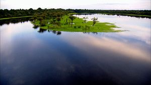 الأمازون المتوحش صورة