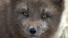 Nordic Wildlife show