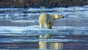 Nordic Wildlife photo