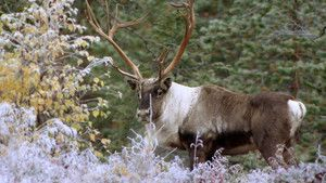 Nordic Wildlife photo