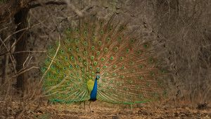Exotic India photo