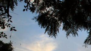 Zambezi photo