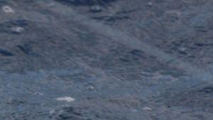 與鯊魚同游: 鯊之島Shark Island 照片