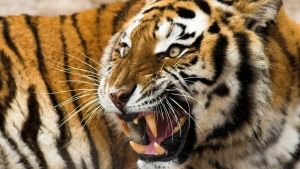 Natural Born Predators photo