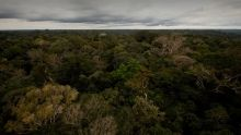 Brazil: The Amazon Basin show